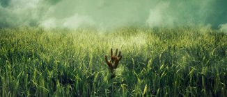 "Vincenzo Natali will direct Netflix adaptation of ""In the Tall Grass"""